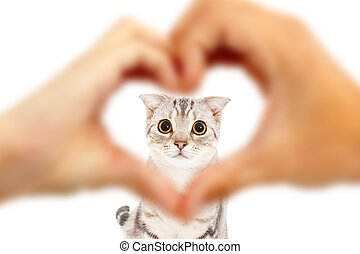 human hands make heart shape and cute cat