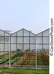 Greenhouse with plants - greenhouse with colorful flowers...