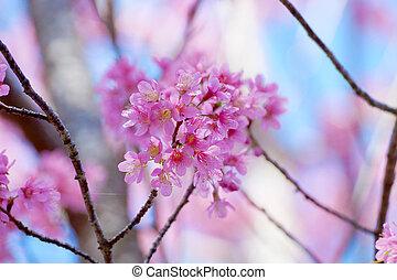 "Pink Flower ""Wild Himalayan Cherry""."
