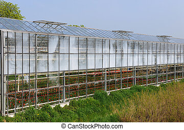 Greenhouse with plants