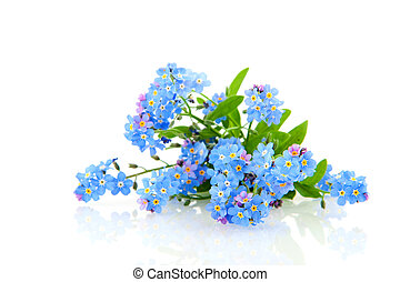 Forget me not - Blue forget me not flowers