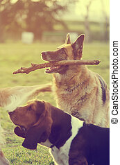 Dog with stick - Dogs playing in the park