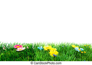 Summertime with cheerful flowers and green grass