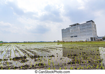 Structure of the building where the breeding bird's nest in a paddy field with blue sky background