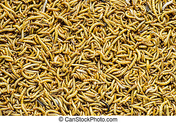 mealworm - A scatter of mealworm larvae, used for feeding...