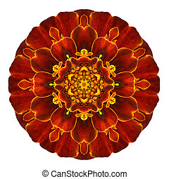 Red Concentric Marigold Mandala Flower Isolated on White -...