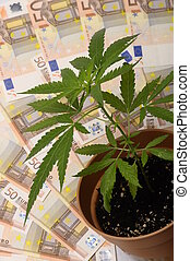 Cannabis plant and euro money - Cannabis plant and lot of...