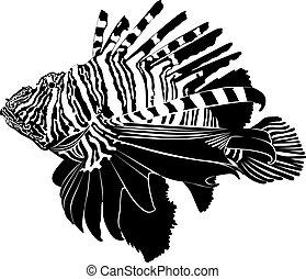 marine aquarium fish Zebra Lionfish