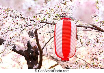 ランタン,  sakura, 日本語