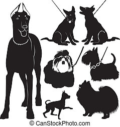 dogs collection in the exhibition vector isolated