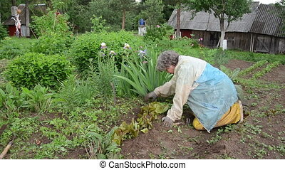 vegetable beds - old woman knees handle vegetable beds...