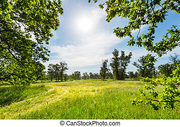Summer grassland - summer grassland