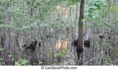 flooded trees sun reflect - Fragment of flooded forest trees...
