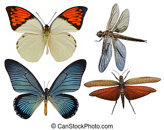 insects butterfly, dragonfly, grasshopper, dragonfly