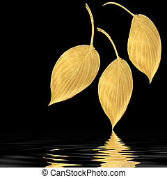 Golden Hosta Leaf Beauties