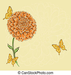 Beautiful chrysanthemum flower with flying butterflies...