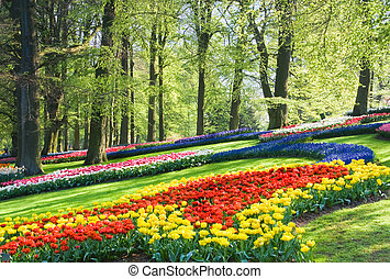Colorful spring flowers in the park