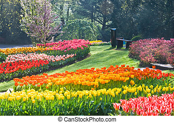 Rainbow of tulips in spring