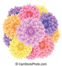 Vector dahlia flowers.