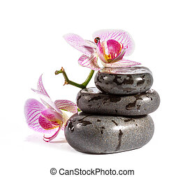 Zen stones with orchid and ladybird. Isolated on white...