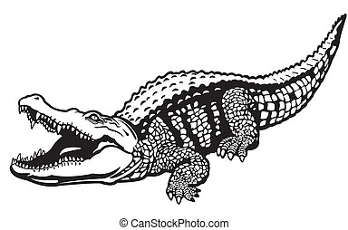 nile crocodile black white - nile crocodile,crocodylus...