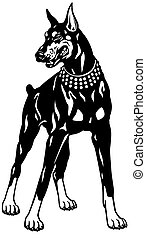 doberman  - dog doberman pinscher breed, black and white