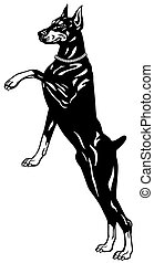 doberman black white - dog doberman pinscher breed, black...