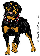 rottweiler - dog rottweiler breed, front view illustration...