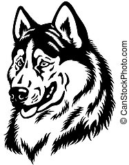 siberian husky head - dog head, siberian husky breed, black...