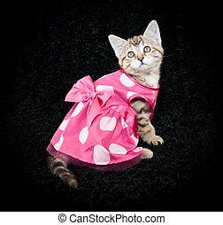 Dressed Up - A sweet kitten wearing a cute little pink poke...