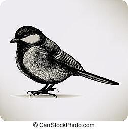Bird titmouse. Vector illustration.