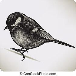 Bird titmouse, hand-drawing.