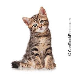 Little tabby - Serious cute little tabby looks forward...