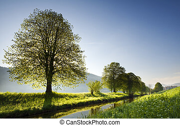 park - Beautiful backlight spring nature scene on clear day