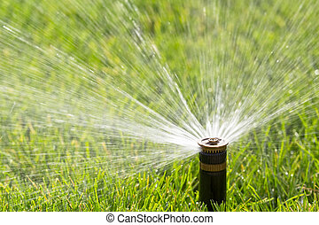 sprinkler watering fresh lawn