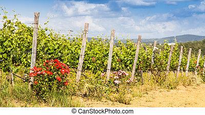 Tuscany Wineyard - Val Orcia, Tuscany region, Italy. The use...