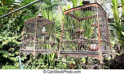 Red-whiskered Bulbul in birdcage at countryside