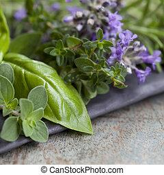 Herbs Still Life
