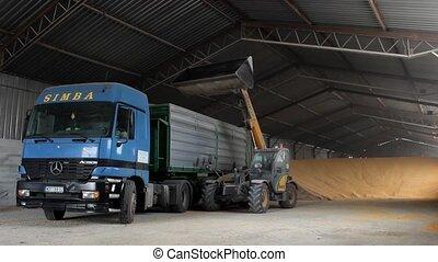 shipping corn - corn in the warehouse