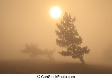 Trees in the fog at sunset