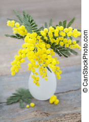 Mimosa - Spring flowers: mimosa in vase on wooden background...