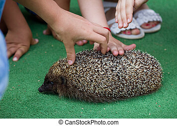 Kids and  hedgehog - Kids and zoo keeper with hedgehog