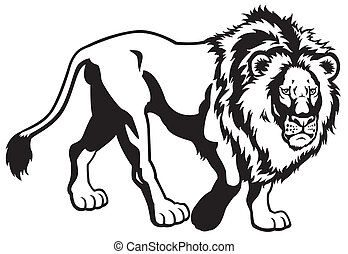 lion black white  - lion black and white image