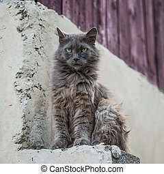 Dirty street cat sitting outdoors
