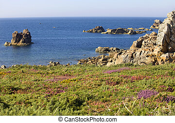 coast rose - Cote de granite Rose, Brittany Coast near...