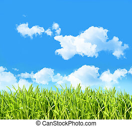 Tall grass with four pictures on clothesline with blue sky