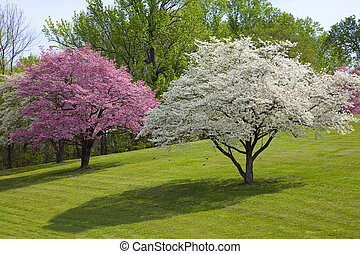 Beautiful Spring Colors - Spring has sprung,trees are...