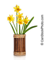 Beautiful Yellow Daffodils flowers in vase isolated on white...