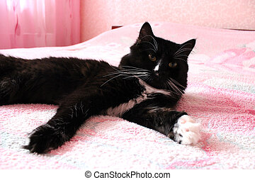 black cat lying prone on the matrimonial bed - black cat...