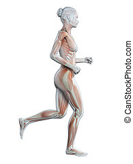 Jogging woman - visible muscles